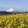 【アラ還さんぽ】菜の花とツーショットの富士山にパワーをもらう。