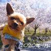 2020年・弘法山に毎日登ったよ!