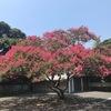 場所は,鎌倉大仏の裏手.  高徳院の裏門に当たるところでしょうか?人知れず枝いっぱいに花を咲かせるサルスベリがあります.お寺とサルスベリは相性がいいように思います.少なくとも鎌倉では,どのお寺にも植えられている?楽しめます.