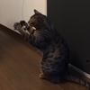 【弐寺+猫】ゲーセン成果と猫のおもちゃ