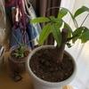 観葉植物から多肉植物まで おばあちゃんも植物が大好きな話😊