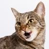腎臓病のネコにおやつを食べさせても大丈夫?ちゅーるは?