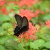 🦋小石川植物園で昆虫を撮影しました