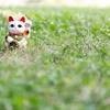 赤べこ家の猫は近所で知り合いが多いらしい