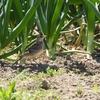 GW河北潟の野鳥①