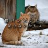 【猫バンバン】冬は猫たちに厳しい季節 Complete  ~ほんの少しの手間で、救える命があります~