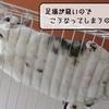 猫の道具 ~すずめの成長?~