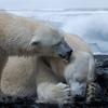 地球温暖化と心身への影響【過去50年のデータから】