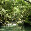 """緑かがやく原生林""""水源地の森""""にいってきました"""