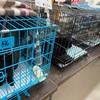 保護猫の譲渡会 ~地元の団体さんが初めて主催する譲渡会にお邪魔しました