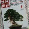 【感想】「盆栽世界 2012年1月号」新企画出版局