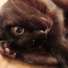 血統書、品種、そんなの猫には関係ないです。どんな猫ちゃんも個性に溢れて愛すべき存在です!