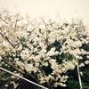春、デニム、パーカーの季節。