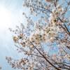04/03(金)晴れ‥春霞