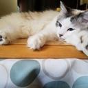 猫とたまこ。