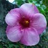 魅力溢れる花の写真特集!!