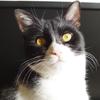 今日の黒猫モモ&白黒猫ナナの動画ー736