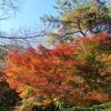 朝ごはんはカフェで決まり 京都の旅 by Goto 2020.11.24-27 Ara-kanふたり旅 1日目〔前編〕