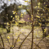 京都御苑で梅を愛でたり、御所の一般公開も@2019