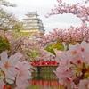 2018年に姫路でお花見デートと言えば一押しはやっぱりココ!
