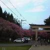 ✿✿ 春のお散歩②✿✿