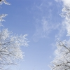 今日は大寒そして二十日正月