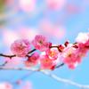 立春 季節を愛でる