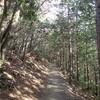 【ハイキング@雲取山②】七ツ石小屋まで、だらだら登りが続きます。
