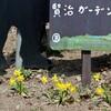「佐久の季節便り」、「賢治ガーデン」にも春の花が…。