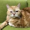 猫の背中、バリカンで刈りました