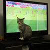サッカー日本代表戦!