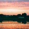 田植え後の夕景