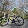 「一般県道高知安芸自転車道線」の一部をサイクリング 景色が最高!