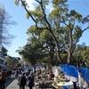 高知県高知市の日曜市&ひろめ市場はとにかく楽しい場所です