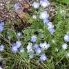 花の咲く季節