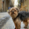 フランスと犬が好きな人へおすすめブログ