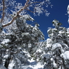 2018年3月25日 北横岳~縞枯山(日帰り・雪山)