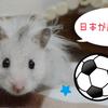サッカーW杯日本代表戦!