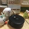 第24回 ハニーズ物語 the honeys story