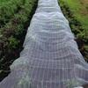 枝豆の防虫ネットはがす。
