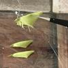 つまみ細工  剣つまみの葉っぱを作る🌿作り方公開しました