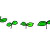 夏野菜の苗を植えた