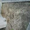 ヨトウムシに悩まされる階段下と、草刈り機にやられた団地の片隅