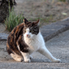 墓場の猫・猫・猫・・・