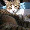 猫の日なのでうちの猫たちとオリキャラを見てほしい