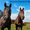 【キャロット募集馬2021出資〜○○までは許容範囲!】総合評価でA-・B+評価の馬特集【現実的な申込対象】