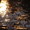 たった二枚の桜の写真のために