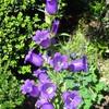 五月の花壇、(6)