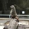 地味なんて言わせない!上野動物園 西園の紹介!