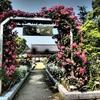 吉香公園バラ園